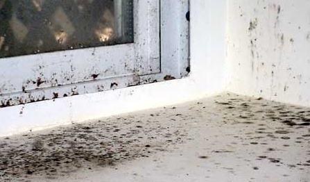 plesen na okne