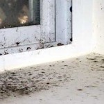 плесень на окне